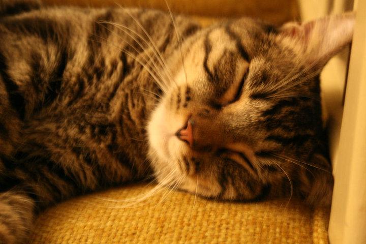Spengler Sleeps