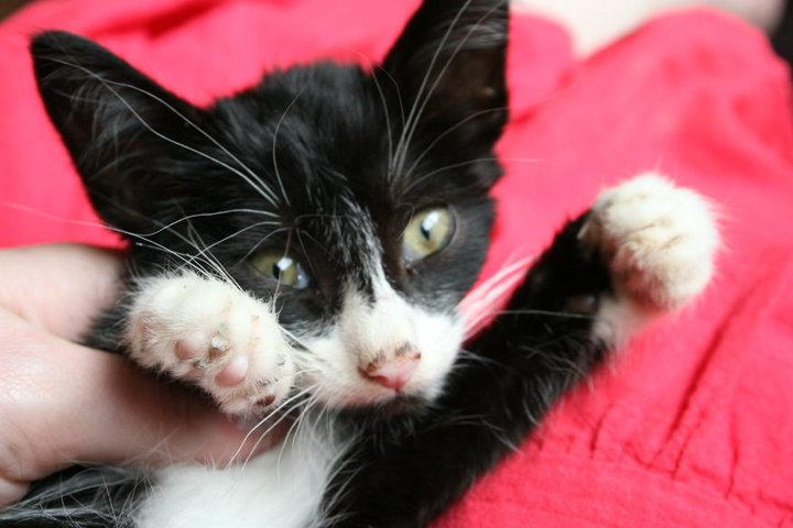 Cat Blog: Week 51