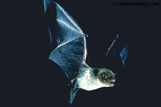 Bat Stories